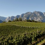 Mezzacorona_vineyards 1
